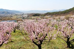 長野に移住をお考えの方は是非!東京開催の楽園信州移住セミナーに参加します!