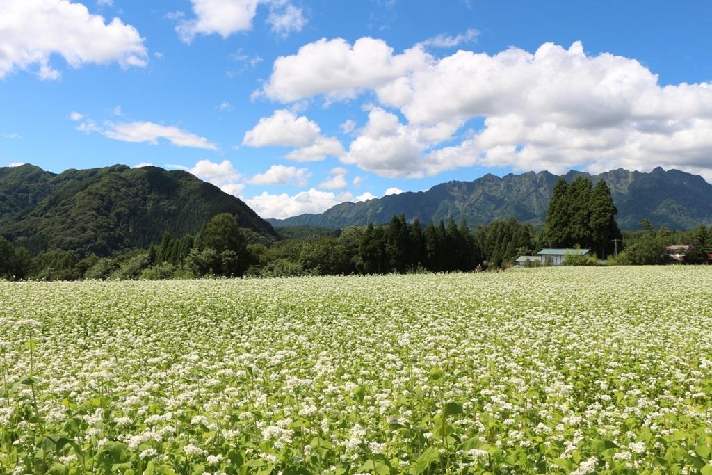 戸隠の蕎麦畑の風景