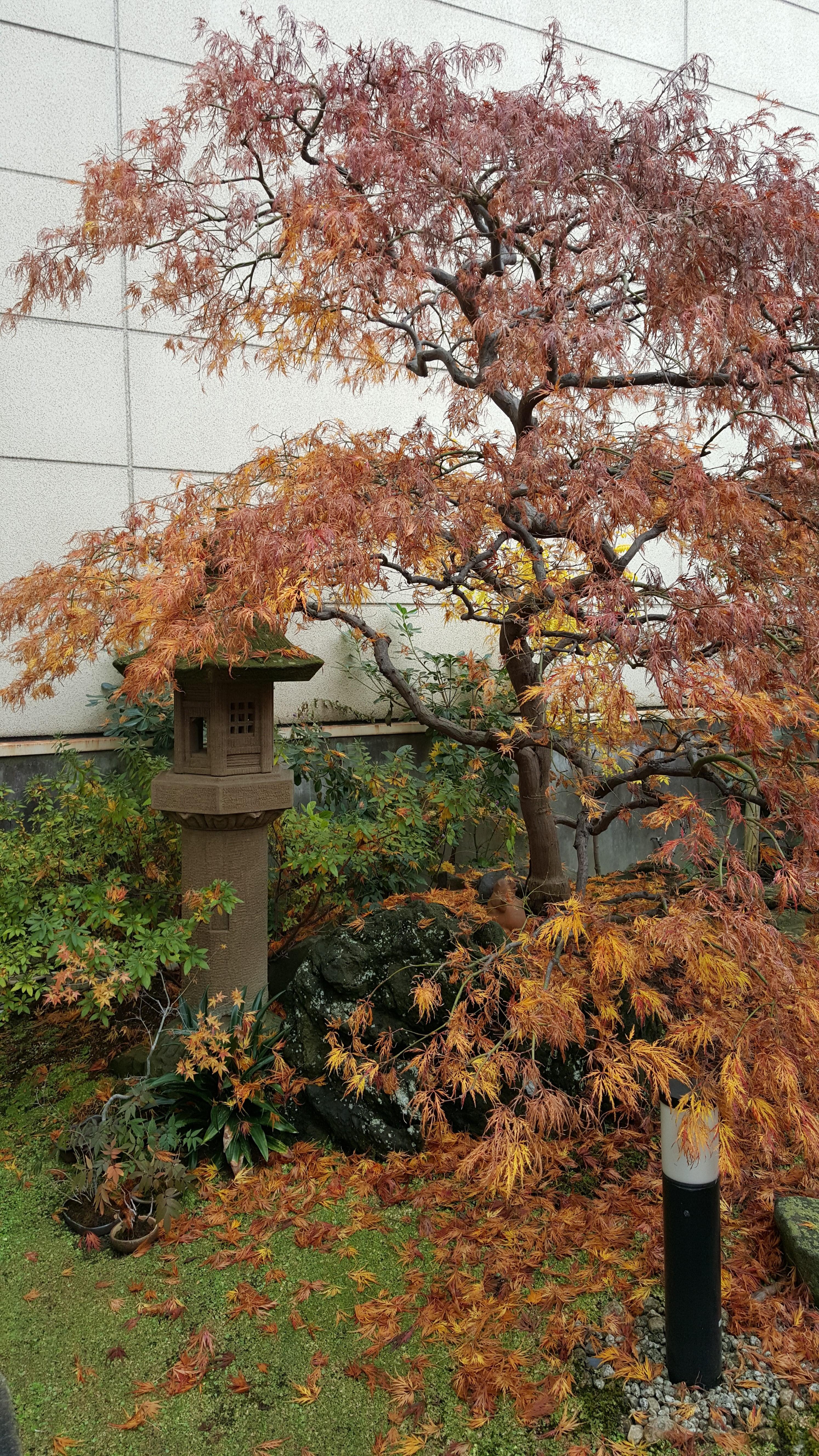 Yokobun_Garden