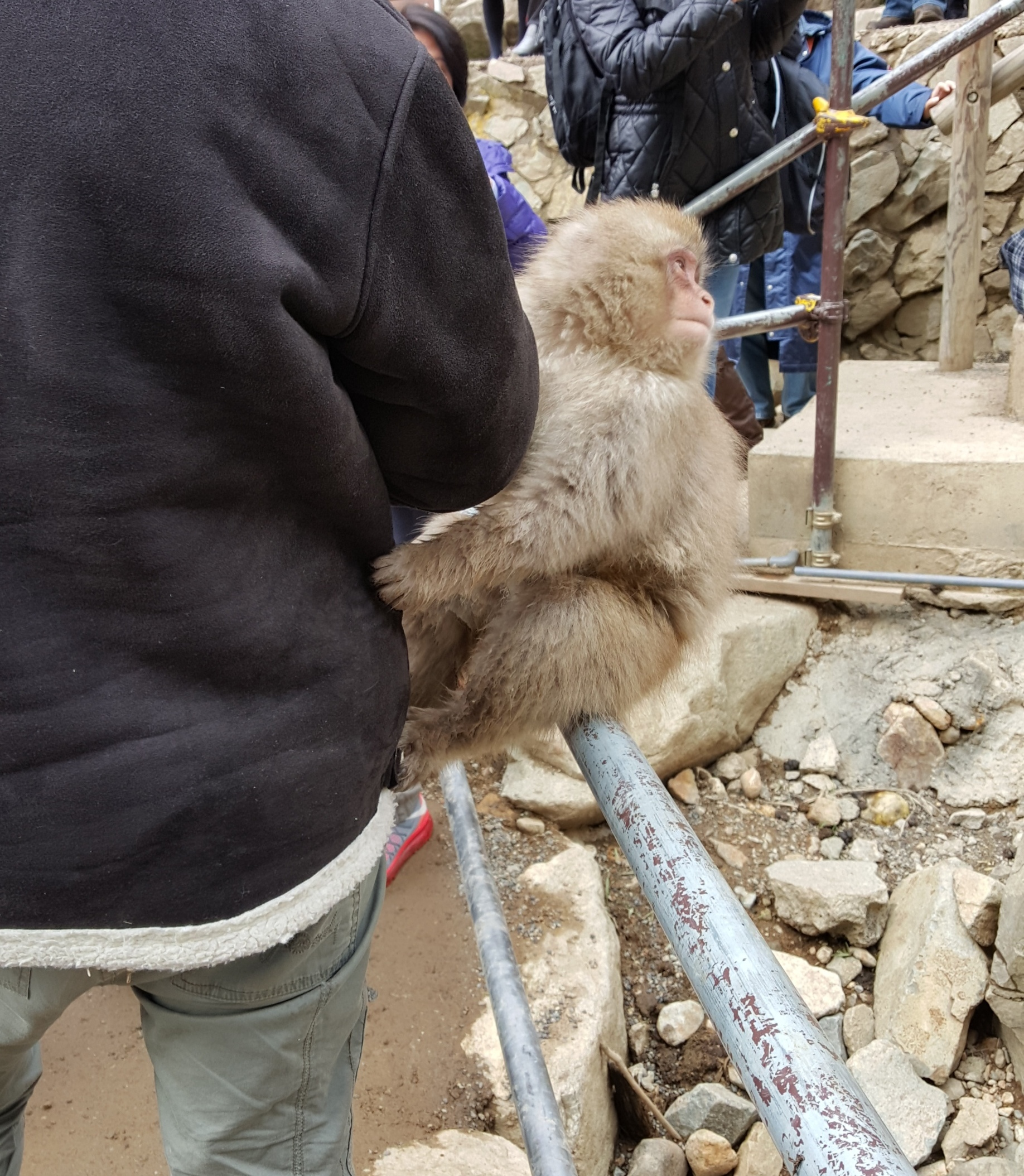 Monkey grab.jpg
