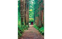 画像:自然の恵みが包み込む、神秘のスポット。戸隠