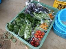 野菜作り2.jpg