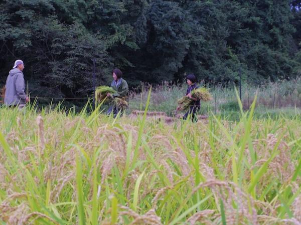201161001_02.jpg