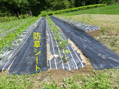 IMGP9170_防草シート.jpg