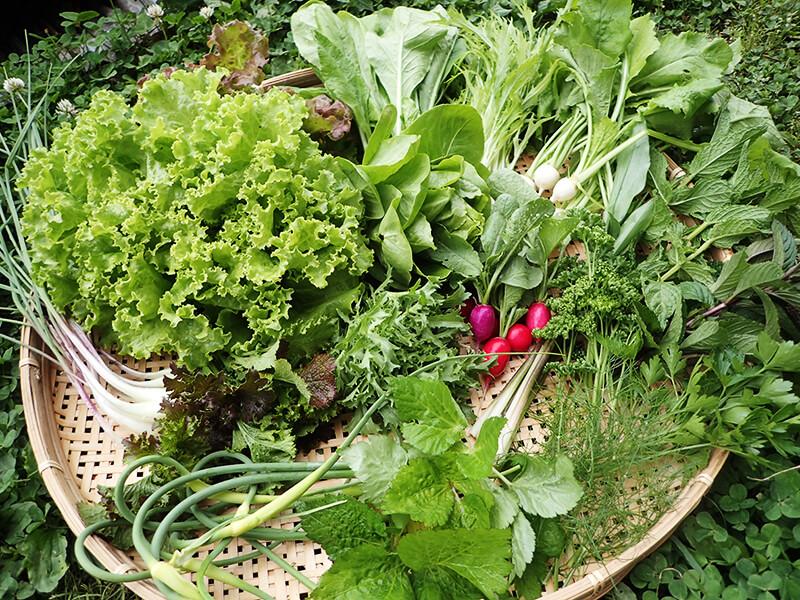 化学肥料や農薬を一切使用しない農作物。旬の恵みをお届けしています