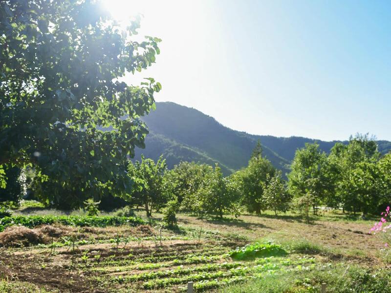 民宿〈WAKAHO GIBIER B&B〉の真向かいには、越前屋さんの畑も。空に手が届きそうなほど、あたり一面に緑が広がる風景は絵画のよう