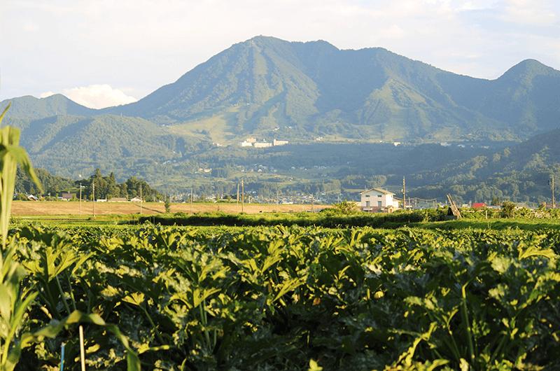 HUNGRYで提供している野菜も、木島平村産のものがほとんど。